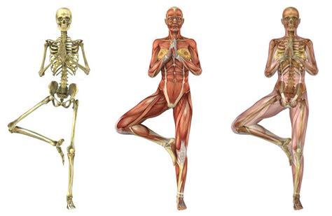anatoma para posturas de 8415053150 curso de anatomia do yoga rede de ioga