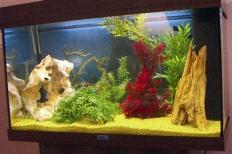 decoration aquarium maison d 233 coration d aquarium fait maison