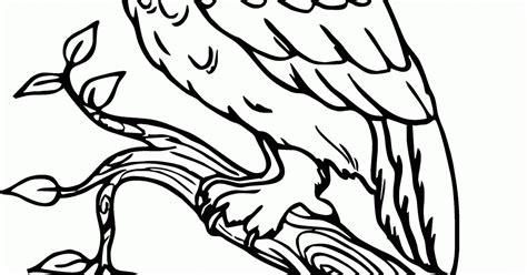 wallpaper kartun burung hantu mewarnai gambar quot burung hantu quot diatas ranting contoh