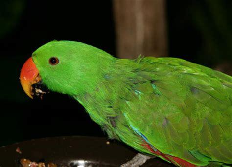 imagenes animales con plumas animal de compa 241 ia las enfermedades de plumas de las aves