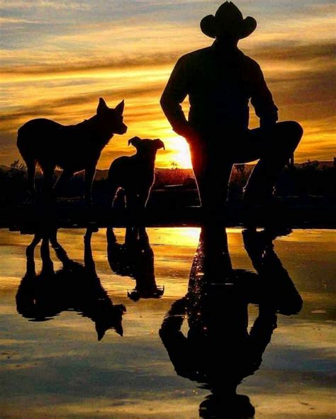 australian cattle cowboys 279 best cowboys cattle and horses images on pinterest