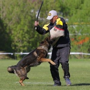 cadenas de castigo alemanas para perros fordogtrainers