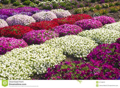 garden flowers a z summer flowers stock photos image 21148973