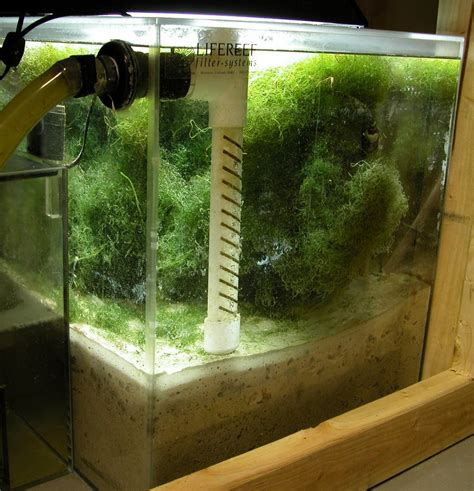 deep sand bed sierra saltwater systems inc deep sand beds and refugiums