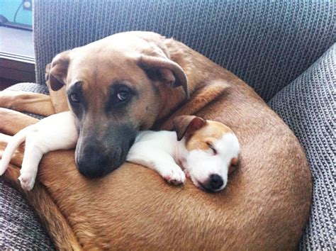 best friend puppies 20 best friends that can t be separated bored panda