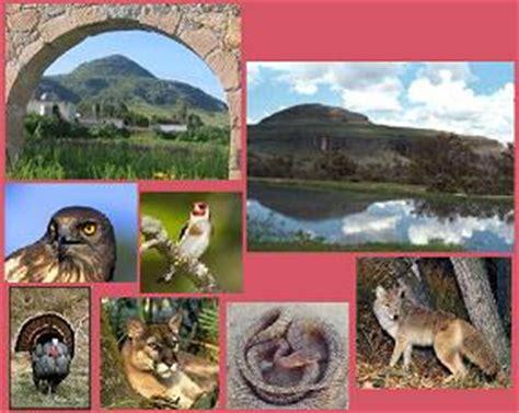 imagenes de animales de zacatecas te 250 l gonz 225 lez ubicaci 243 n y clima