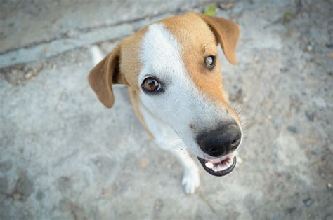 white gums in dogs what causes white gums in dogs dogvills