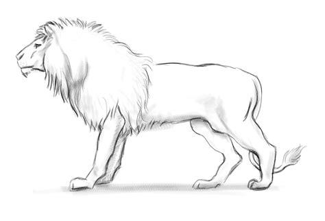 imagenes realistas de animales dibujos de animales paso a paso taringa