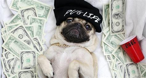 doug the pug instagram 11 times doug the pug made us lol because puglife