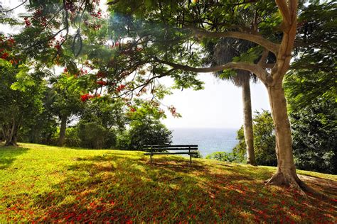 bench under tree bench under a flamboyan tree photograph by george oze