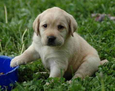puppies that stay small forever 1000 images about an addition to the family on