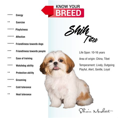 shih tzu temperament lively shirin merchant on quot shih tzu span 10 16 years temperament lively