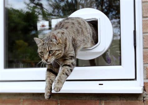 pet porte microchip cat flap cat door petporte smart flap 174 microchip cat flap