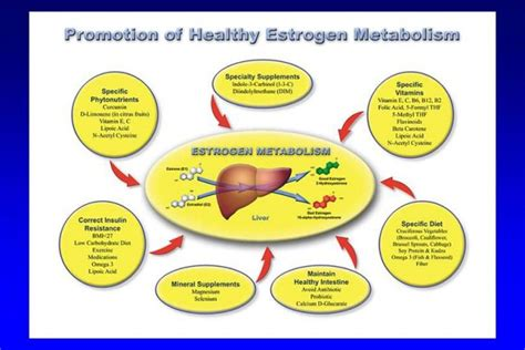 Foods For Estrogen Detox by Aromatase Inhibiting Foods And Herbs Drjockers