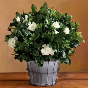 Bl 252 hende zimmerpflanzen f 252 r einen magischen und frischen duft