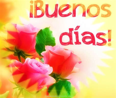 imagenes de rosas buenos dias rosas para unos buenos dias im 225 genes de primavera