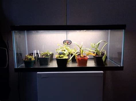 indoor led light strips growing plants indoors with led lighting birddog