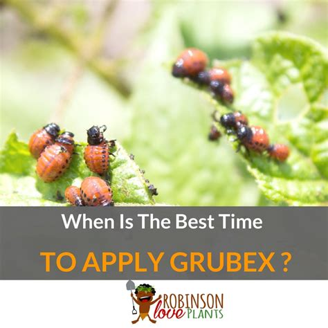 when is when is the best time to apply grubex