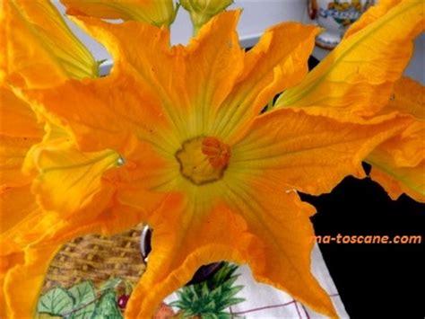 fiori di zucchini fritti fleurs de courgettes fiori di zucchini fritti ma toscane