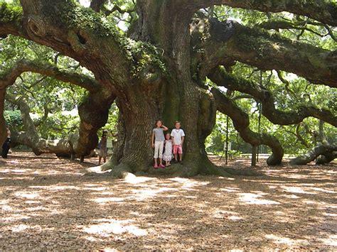 flower cottage columbus nc three pixie oak tree