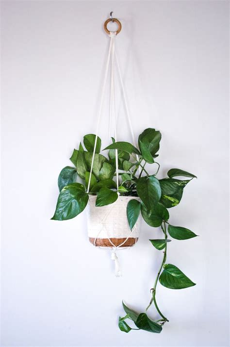 Diy Plant Hanger - diy macrame plant hangers diy better homes