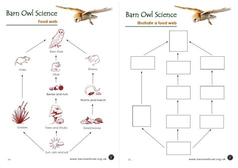 barn owl food web diagram barn owl conservation science educational resources the