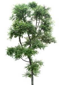 imagenes png vegetacion tubes arbres arbustes feuillages blog de l ile de kahlan
