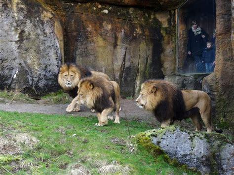 Reinigung Zoologischer Garten Berlin by Www Zoo Wuppertal Net Tiernachrichten M 228 Rz 2016 Aus Dem