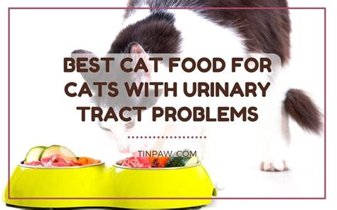 best cat food for cats with urinary tract problems 3 products you need to know tinpaw