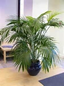 les plantes d int 233 rieur lumi 232 re et humidit 233 d 233 coration