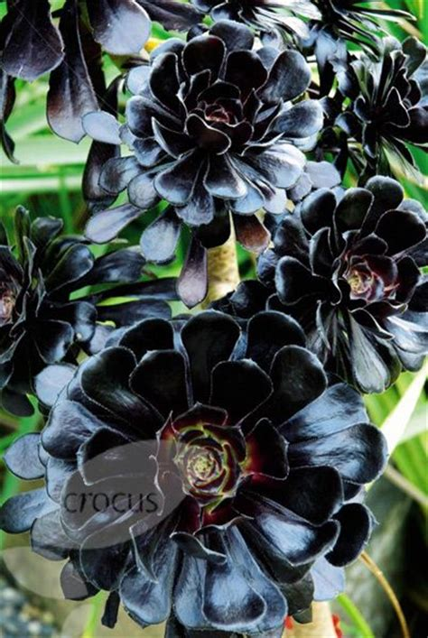 black flower garden northwest flower garden show black plants in vogue