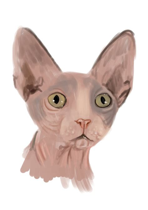 sphynx cat color study 2011007 by Trutze on DeviantArt