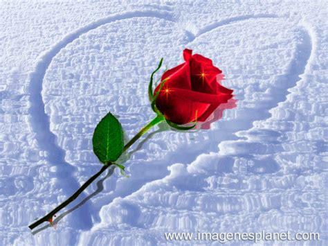 lindas imagenes con frases gif imagines tiernas de rosa dentro del coraz 243 n en nieve con