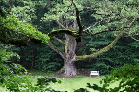 european trees the european tree of the year protected trees in the