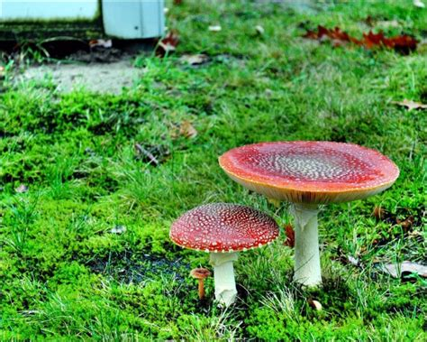 edible backyard mushrooms 7 edible landscape design ideas to make the most out of