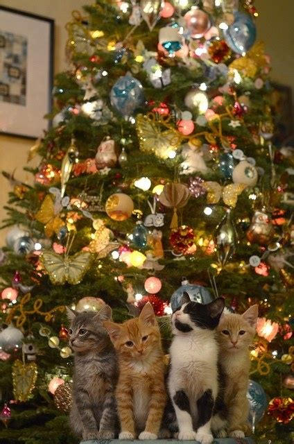 35 best cats and christmas trees images on pinterest