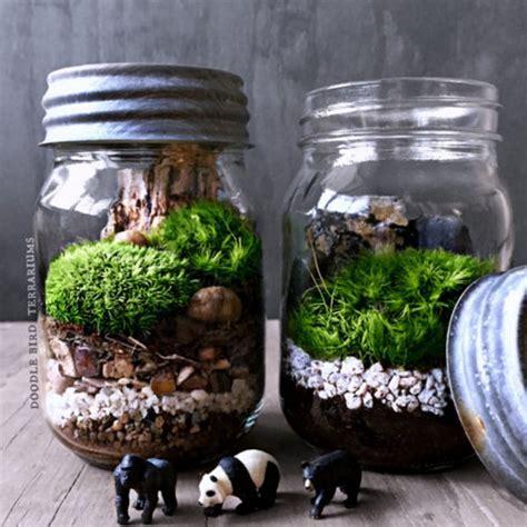 Mason Jar Terrarium   ApolloBox