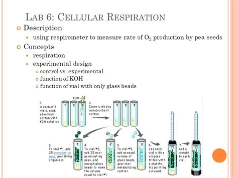 design lab on respiration ap biology lab review ppt video online download