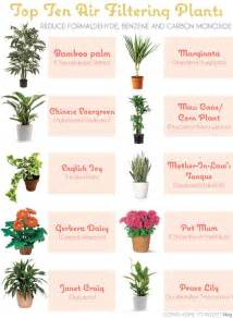 6 house plants that clean your air positivemed
