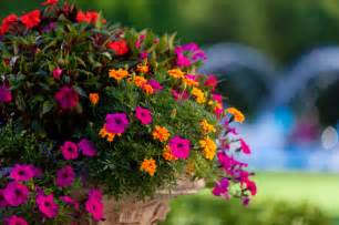 vibrant colorful flower pots gardens and plants