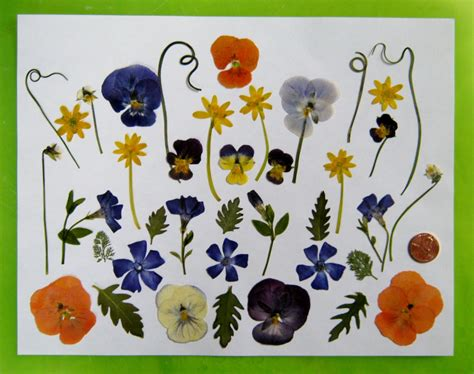 pressed flowers tips for pressing and using pressed flowers part i minding my p s with q