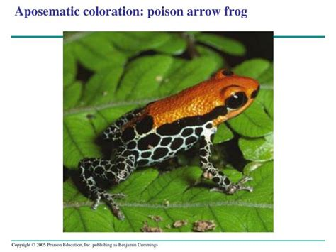 aposematic coloration ppt combined power point notes biology 111a lange