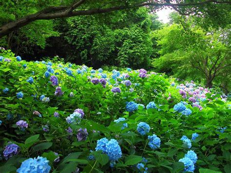 beautiful flower garden pics beautiful garden flowers wallpapers pics gallery