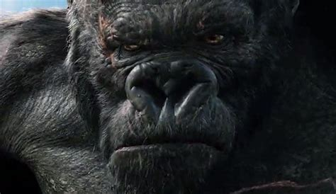 movie quotes king kong king kong 2005 quotes quotesgram