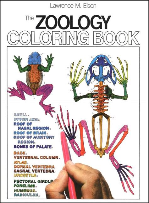 anatomy coloring book harpercollins zoology coloring book 004696 details rainbow resource