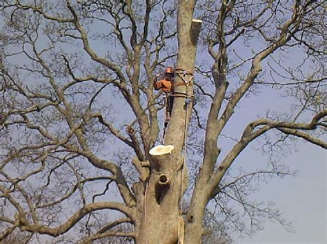 felling a tree in sections mark newell tree care ltd warwickshire uk