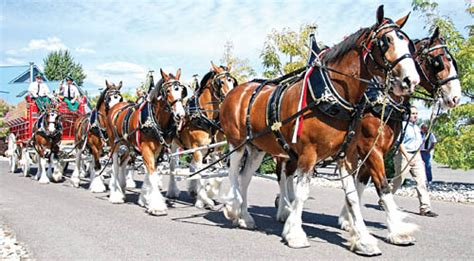 Office Depot Hours Spartanburg Sc Budweiser Clydesdales City Of Landrum