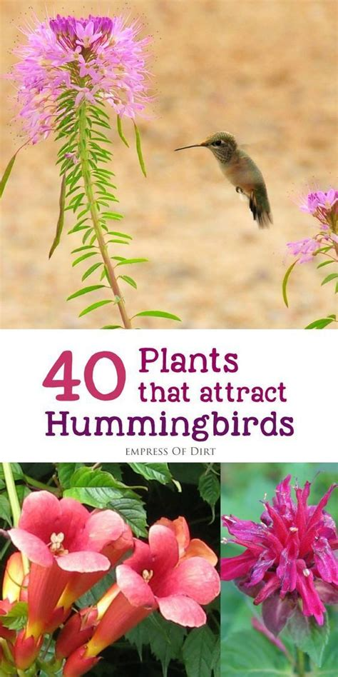 botanica ii flowers that attract hummingbirds and butterflies volume 2 books 40 plants that attract hummingbirds gardens beautiful