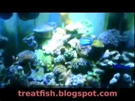 Lu Led Aquarium Air Laut aquarium air laut dengan lu led biru dan lu terang