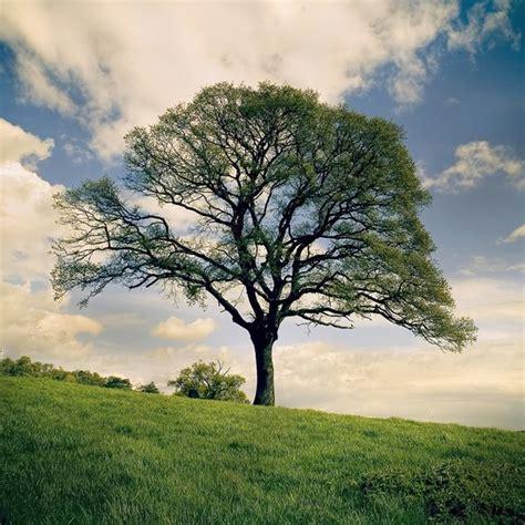 tree photography d 220 nyanin en g 220 zel foto苙raflari bunlar es莢n akarsu